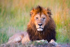 Big-Cat-Photo-Safari-Tours