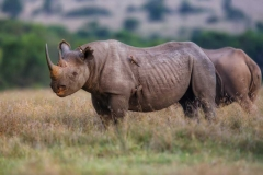 rhino big five