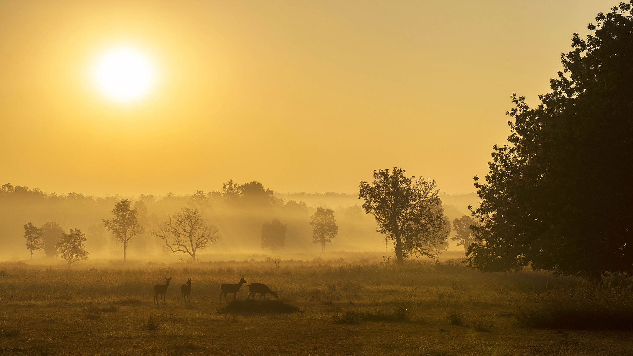 Early morning soft light at kanha national park