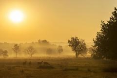 Early morning soft light at kanha national park