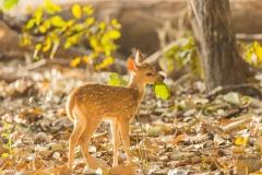 Sad-deer-little-one