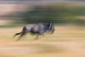 Great migration photo safaris