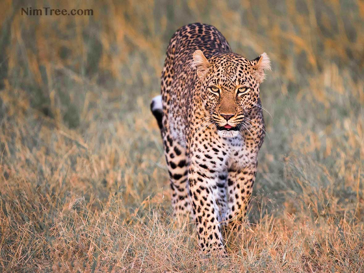 African Photography Safaris