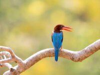 Indian Bird Photography Safaris