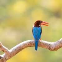 Indian Bird Photography Safaris