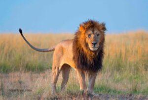 Masai Mara Photography Safaris