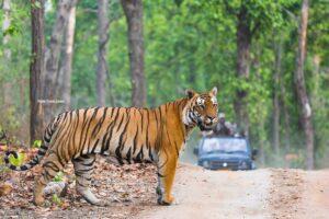 Tiger Photography Safaris India