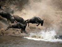 Migration Photography Safaris