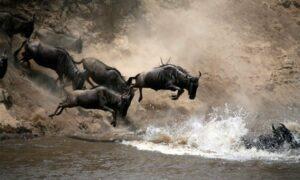 Migration Photo Safaris Masai Mara