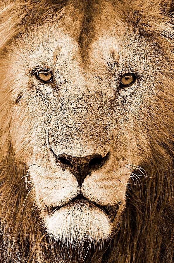Big Cat Photo Safaris Africa