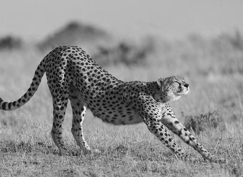 masai mara photo safaris