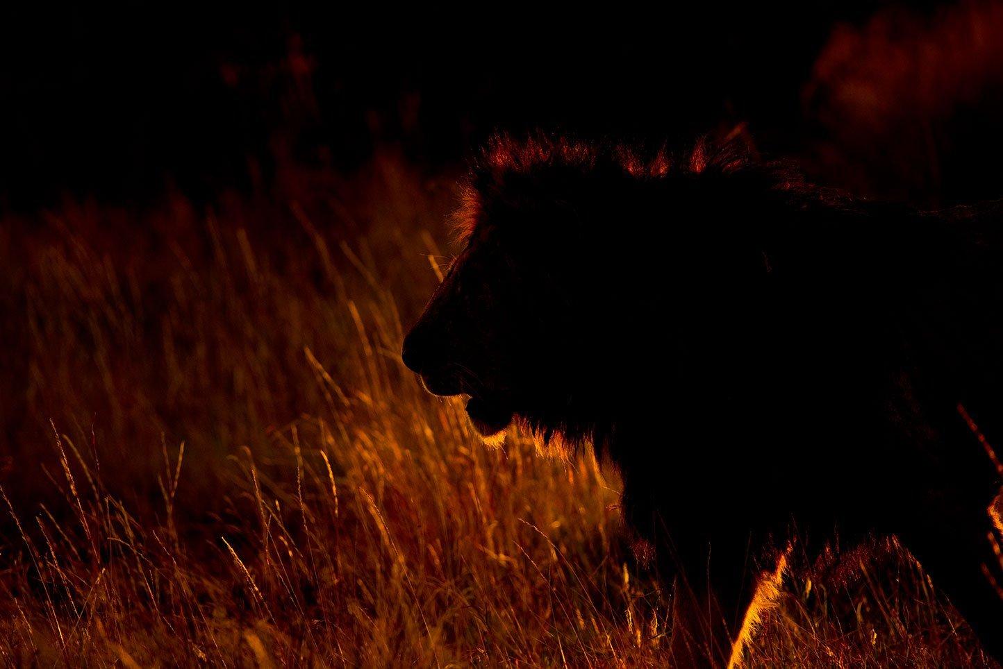 Serengeti photo safaris