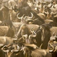 great migration photo safaris