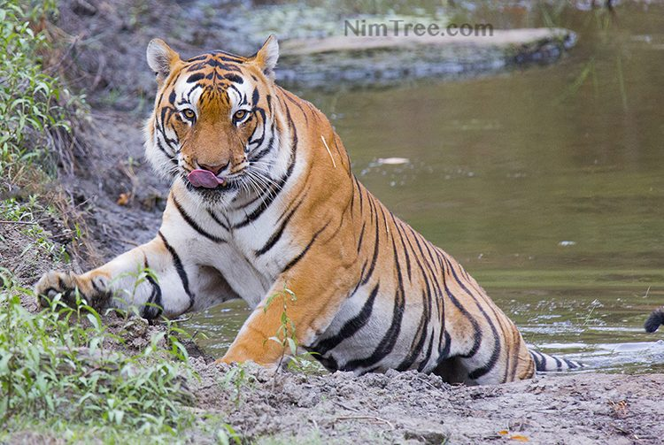 Tiger Photography Tours