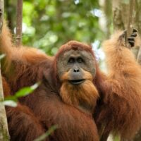 orangutans photography tours