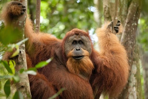 orangutans photography tours