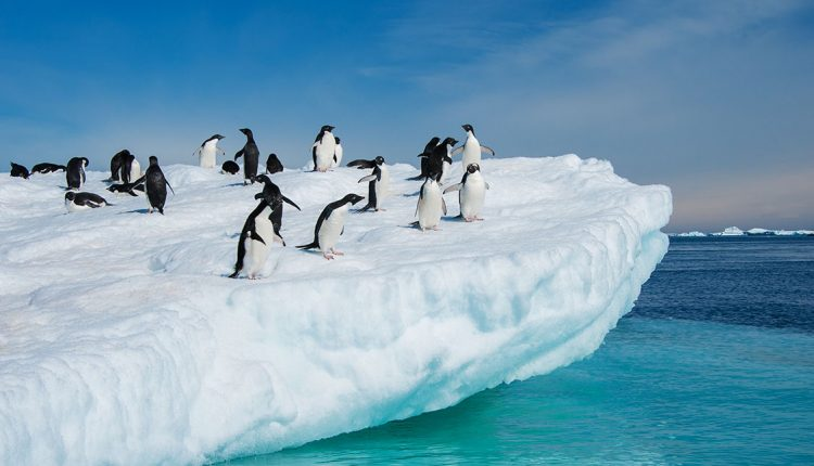 Antarctica photography tours