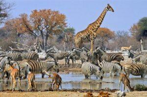 Namibian wildlife photo Tours