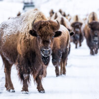 Yellowstone photography tours