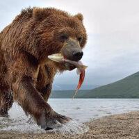 kamchatka bears photo tours