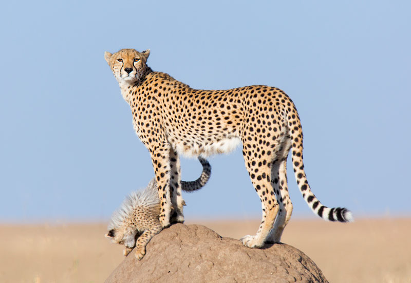 Big Cats Photo Safaris