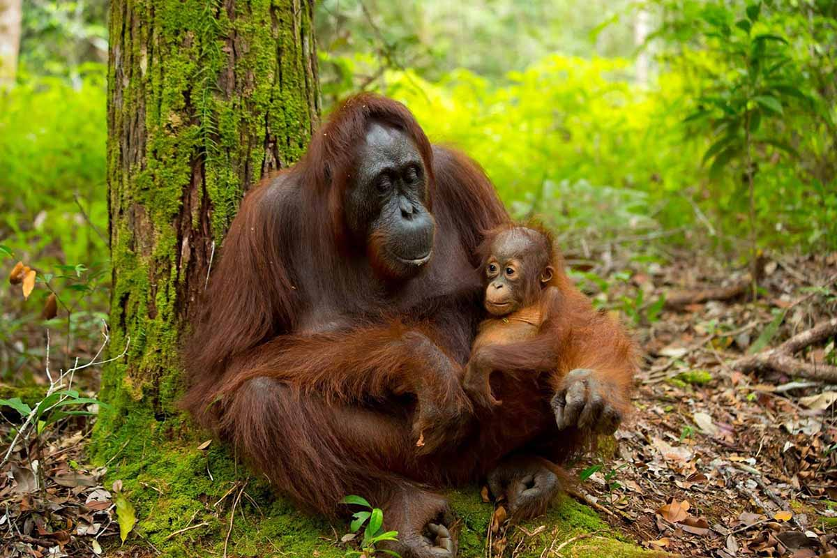 Orangutan Photo Tours