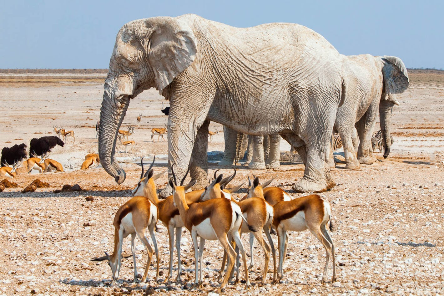 Namibia photography Safaris