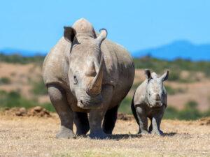 Rhino photo tours