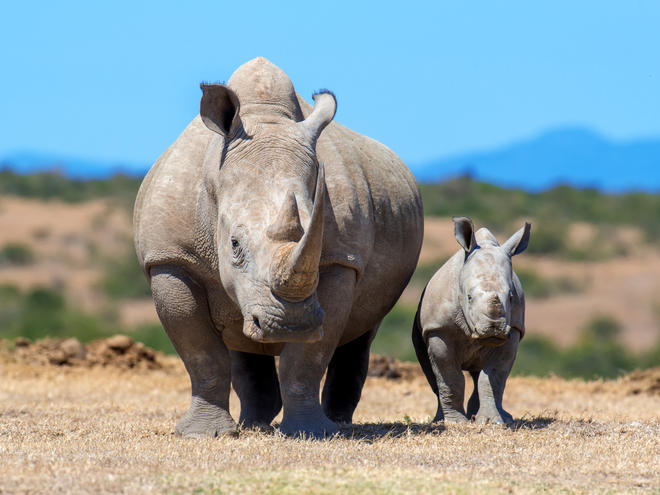 Rhino photo tours