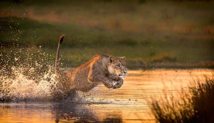 Botswana Photo Safaris