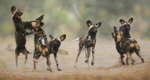 african wild dog photo safaris