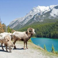 canadian wildlife photo tours