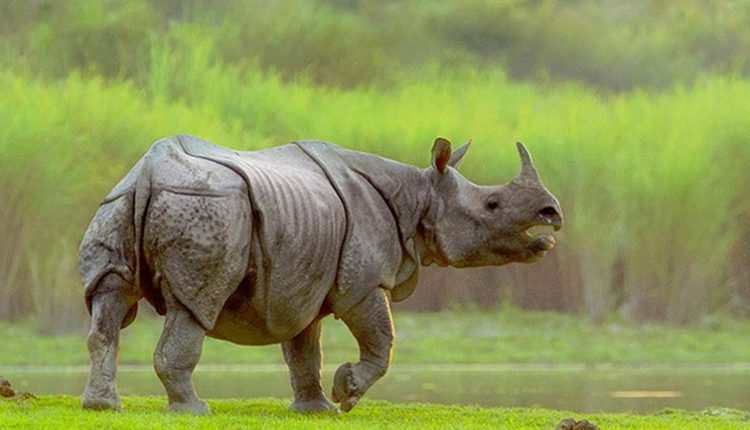 kaziranga rhino photo tours