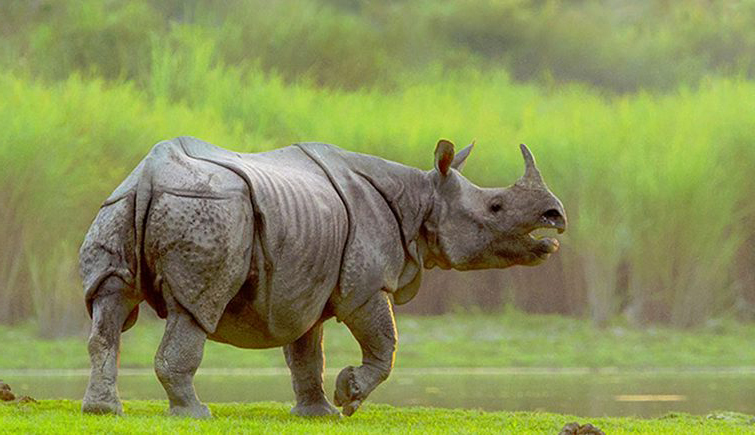 kaziranga rhino photo tours