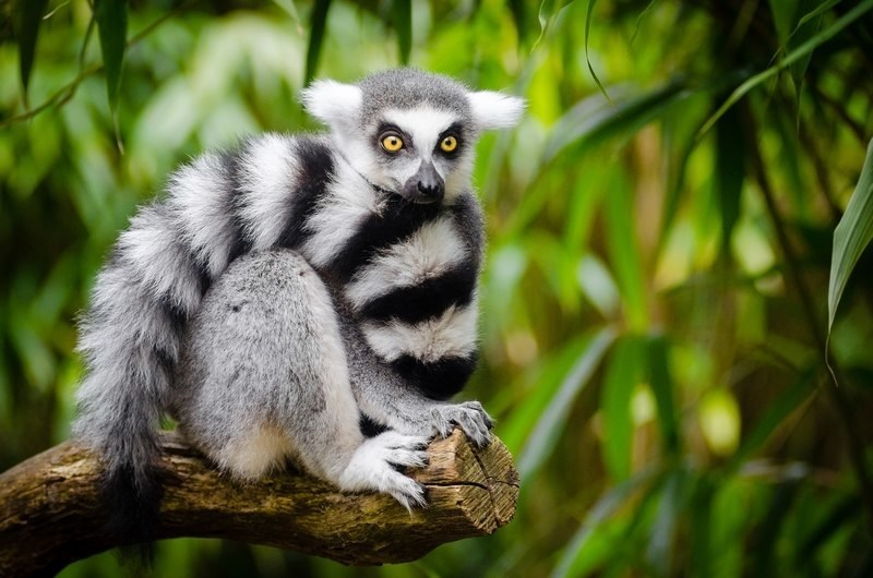 madagascar photo tours