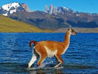 patagonia wildlife photo tours