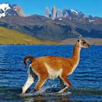 patagonia wildlife photo tours