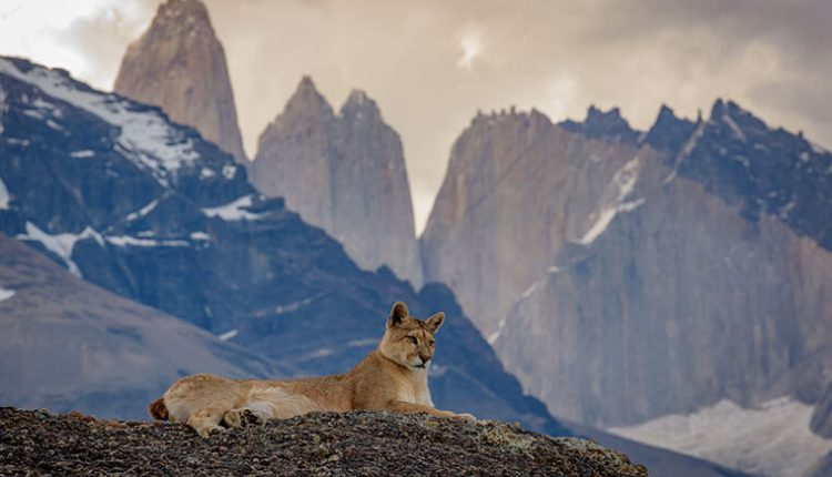 puma photo tours patagonia